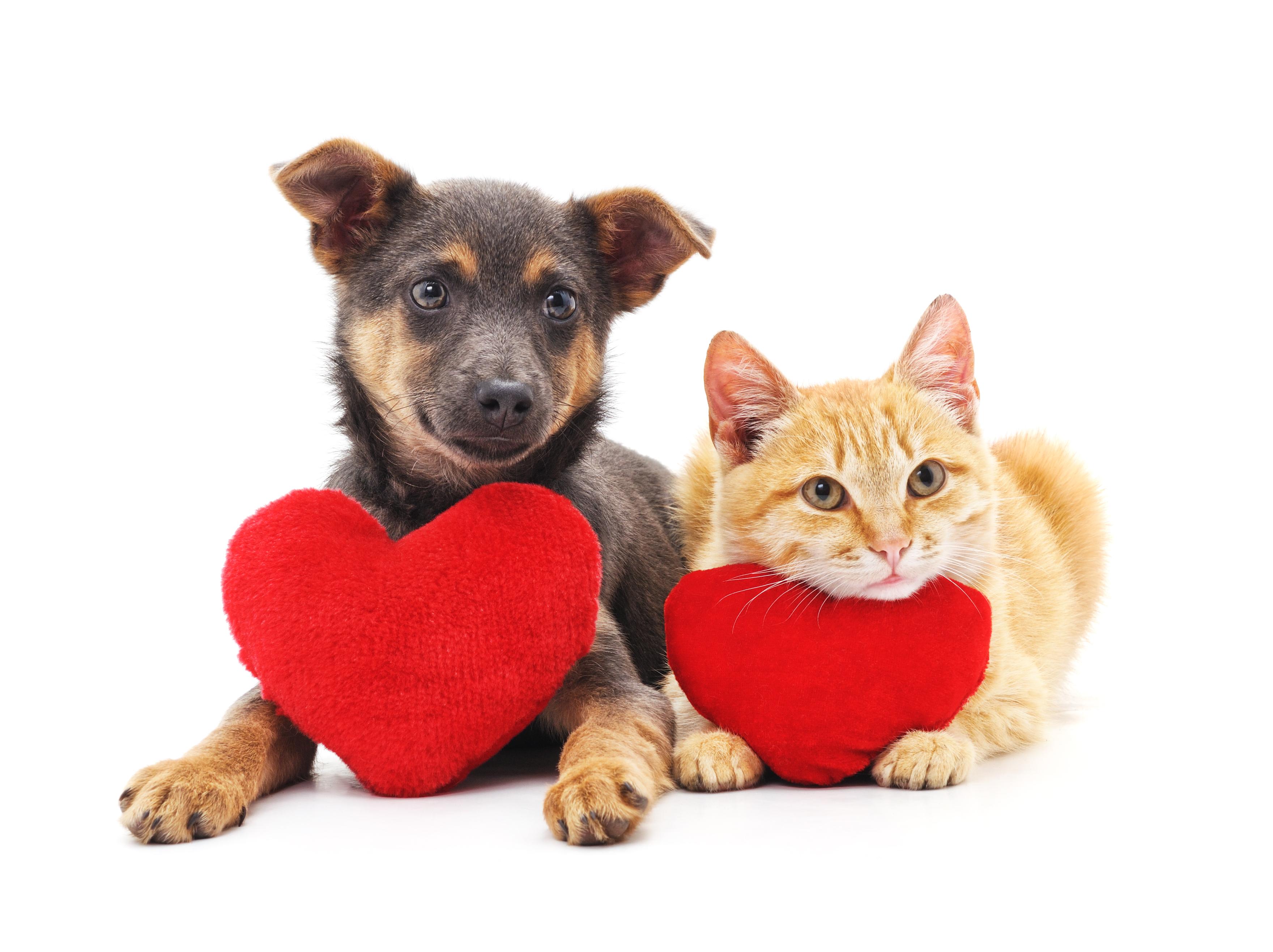National Pet Memorial Day, Pet Loss, Pet Grief, Death